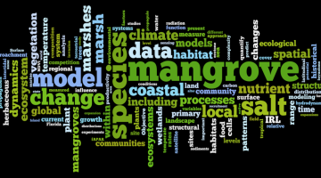 mangrove, word cloud