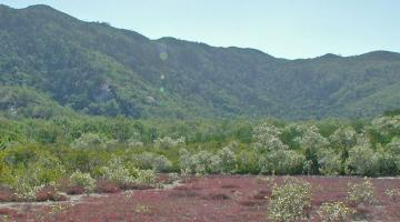 Cape Cleveland, Australia, mangrove