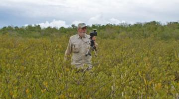 leaf area index, mangrove, Florida