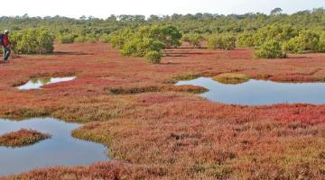 mangrove Tinchi Tamba Wetlands