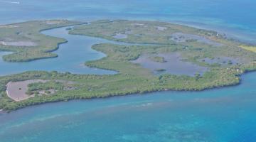 mangrove archipelago Belize