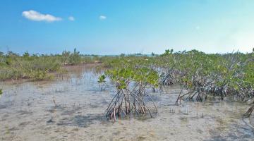 mangrove Zapata Swamp Cuba
