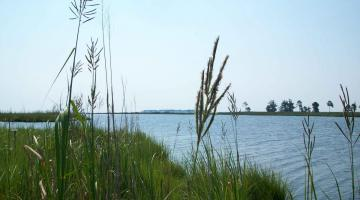 Marsh Vegetation