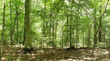 SERC forest panorama
