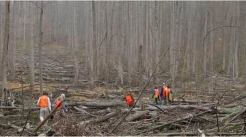 Volunteers in logged forest