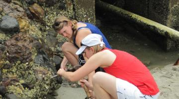 Kristina Hill-Spanik and Dr. Katrina Lohan are removing oysters from rocks at Punta Chame.