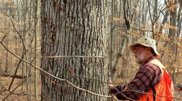 Our volunteer Chris Buck measuring a hickory